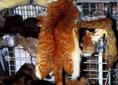 Name:  fur- 2.jpg Views: 373 Size:  5.3 KB