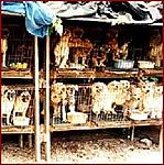 Click image for larger version  Name:puppymill3.jpg Views:1483 Size:62.5 KB ID:5897