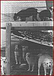 Click image for larger version  Name:puppymill1.jpg Views:250 Size:29.8 KB ID:5898