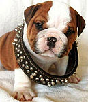 Click image for larger version  Name:funny-dog.jpg Views:251 Size:34.7 KB ID:6103