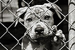 Click image for larger version  Name:adopt_dog.jpg Views:218 Size:48.3 KB ID:6094